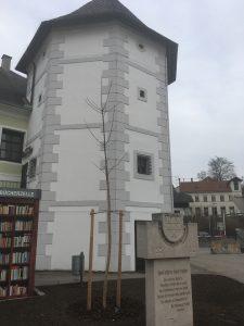 Baum_Fischerturm